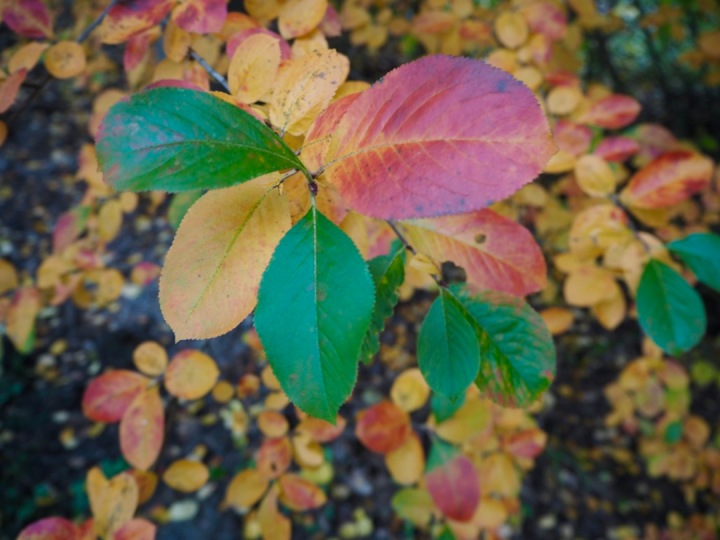 minnalinna.com Minna Linna blogi